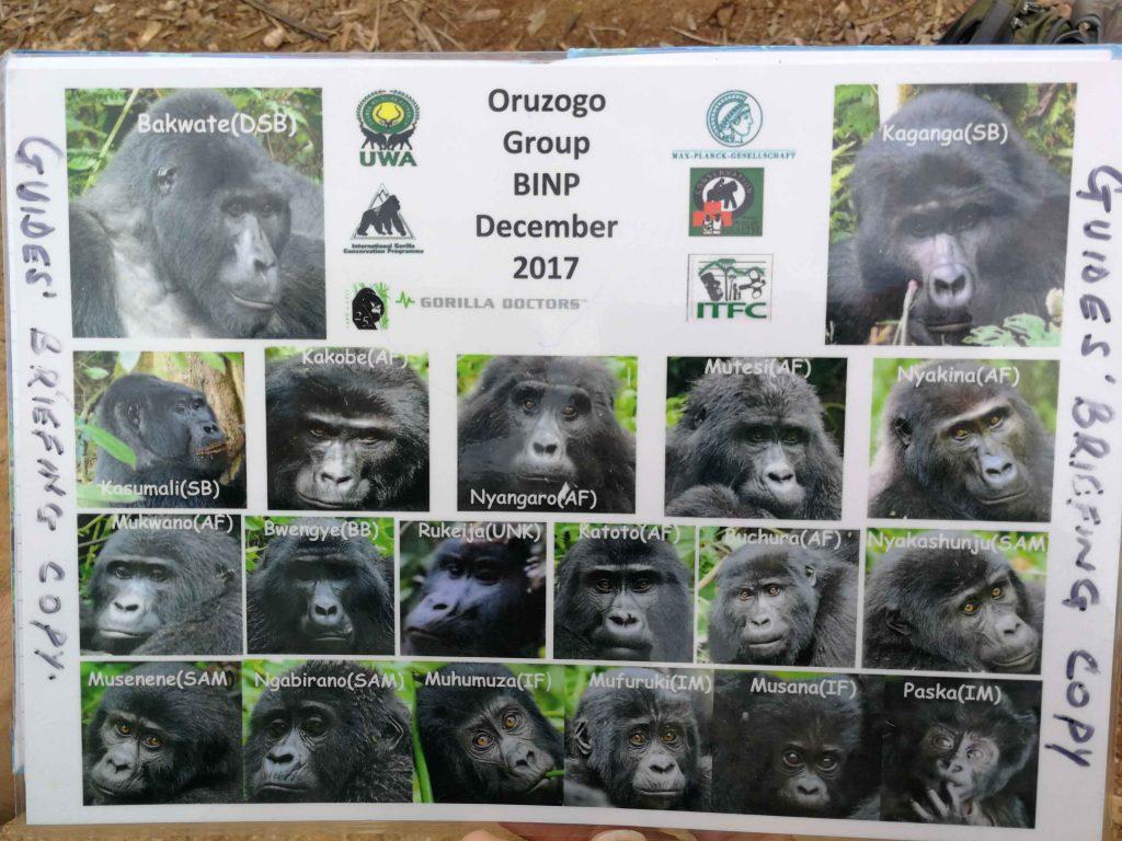Imagen de los miembros de la familia de Gorilas de Montaña Oruzogo