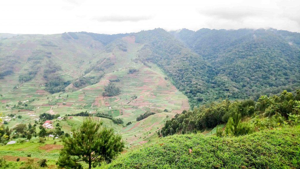 Límite de la Selva del Parque Nacional del Bosque Impenetrable de Bwindi y los campos de cultivo.