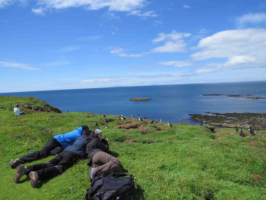 Colonia de frailecillos en la Isla de Lunga