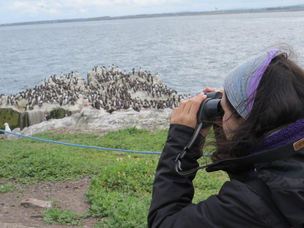 Observando con prismáticos colonia de aves marinas
