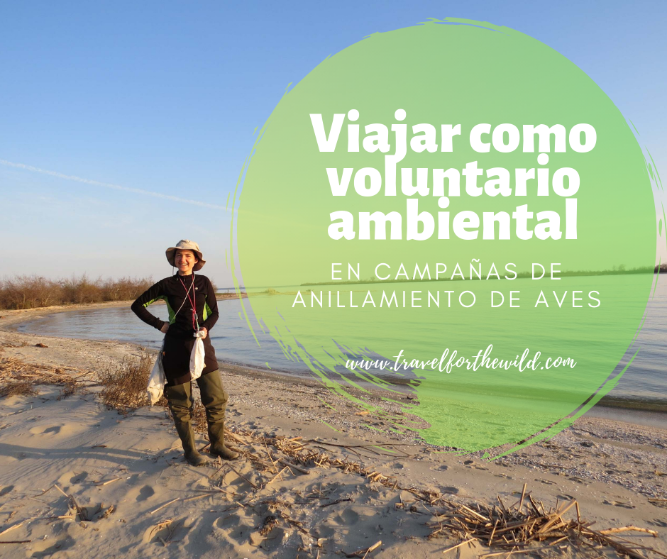 Viajar como voluntario ambiental