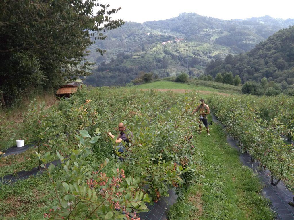 Destinos de Naturaleza, Cabranes, Asturias