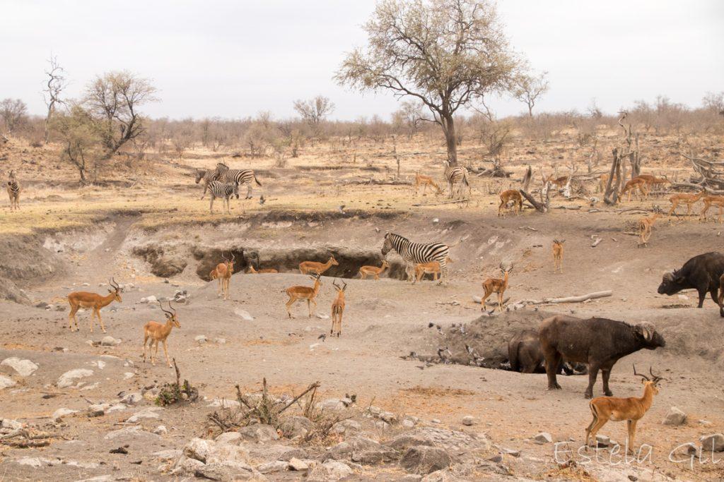 Destinos de naturaleza: Parque Nacional Kruger